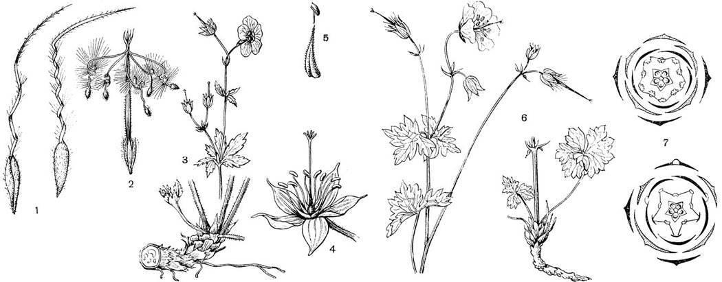 Лечебные свойства глухой крапивы и противопоказания к применению травы