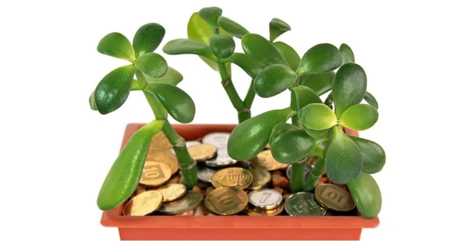 Какие комнатные растения привлекают в дом счастье и богатство