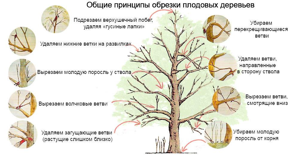 Когда обрезать деревья и чем замазать спилы на плодовых деревьях - pocvetam.ru