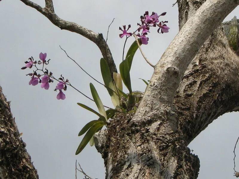 если второй орхидеи в естественных условиях фото этом году нас