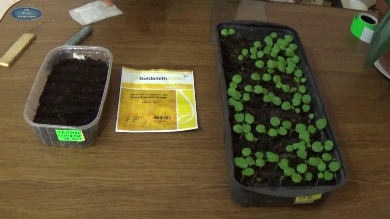 Как вырастить гортензию из семян в домашних условиях