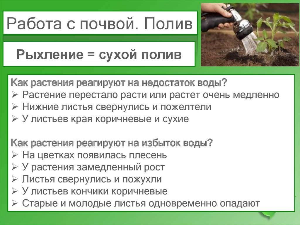 Правила полива декоративных растений