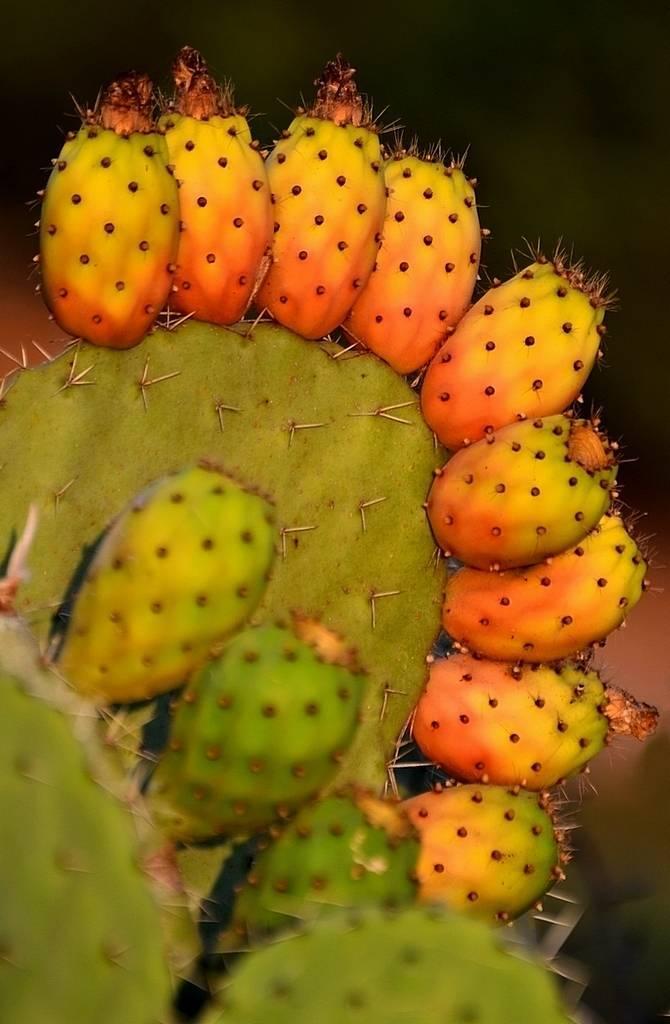 Болезни кактусов: распространенные заболевания и их методы лечения