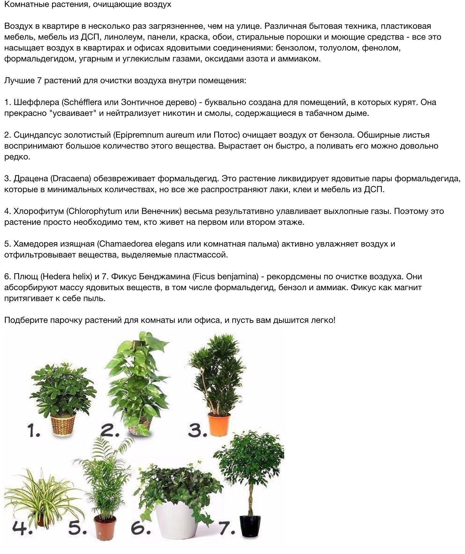 Комнатные растения для домашней очистки воздуха