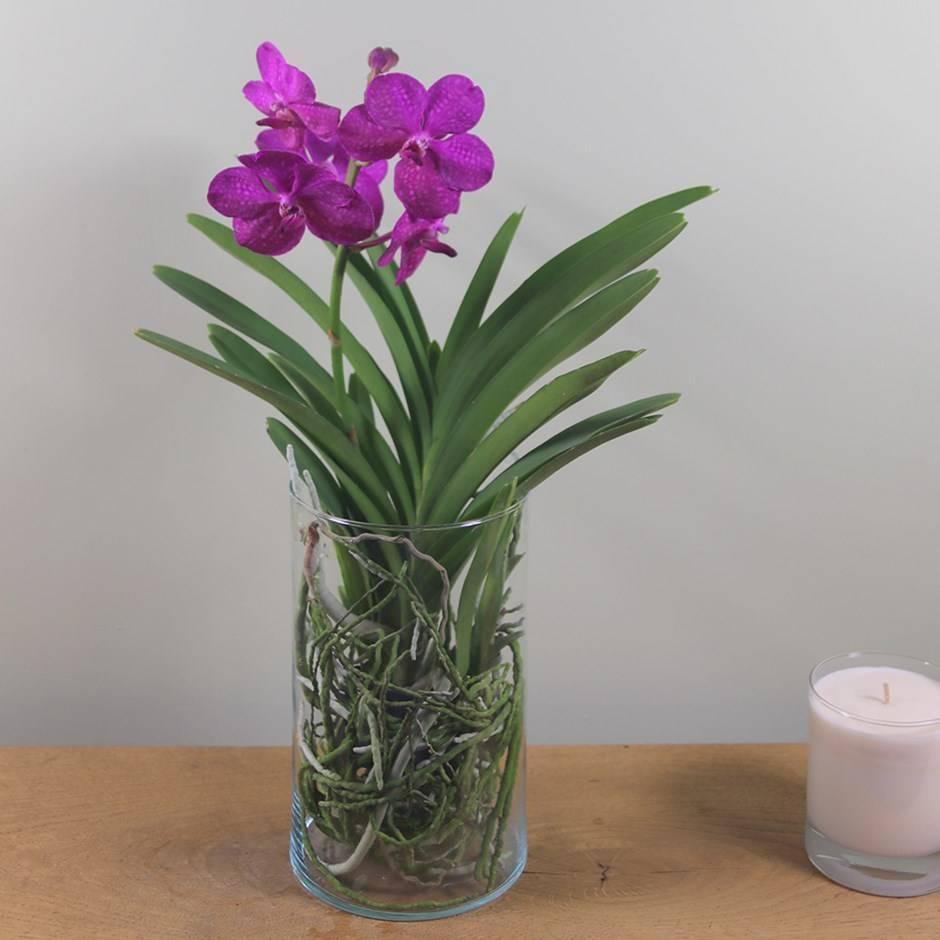 Цветы орхидея ванда: фото видов, уход и размножение орхидеи vanda в домашних условиях