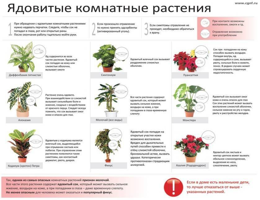 Какие цветы нельзя держать дома – фото и приметы