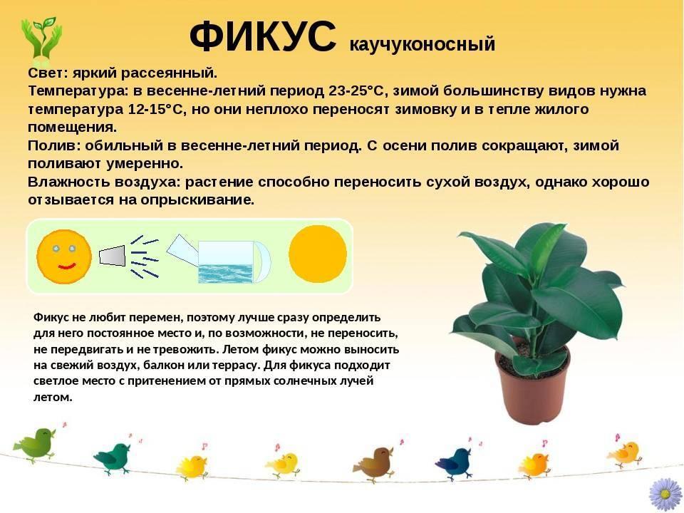 Эхинокактус грузони: примеры ухода с домашними условиями
