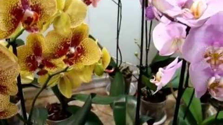 Чудо природы – фиолетовые орхидеи. описание, фото, рекомендации по выращиванию