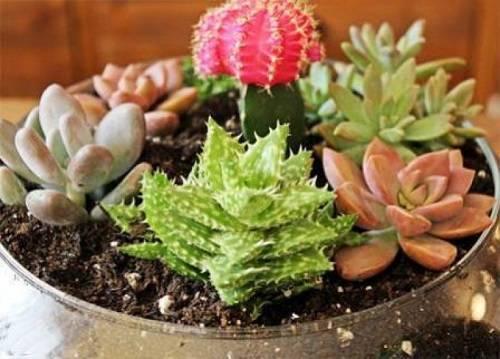 Суккуленты на клумбе: на улице или в саду, зимующие почвопокровные
