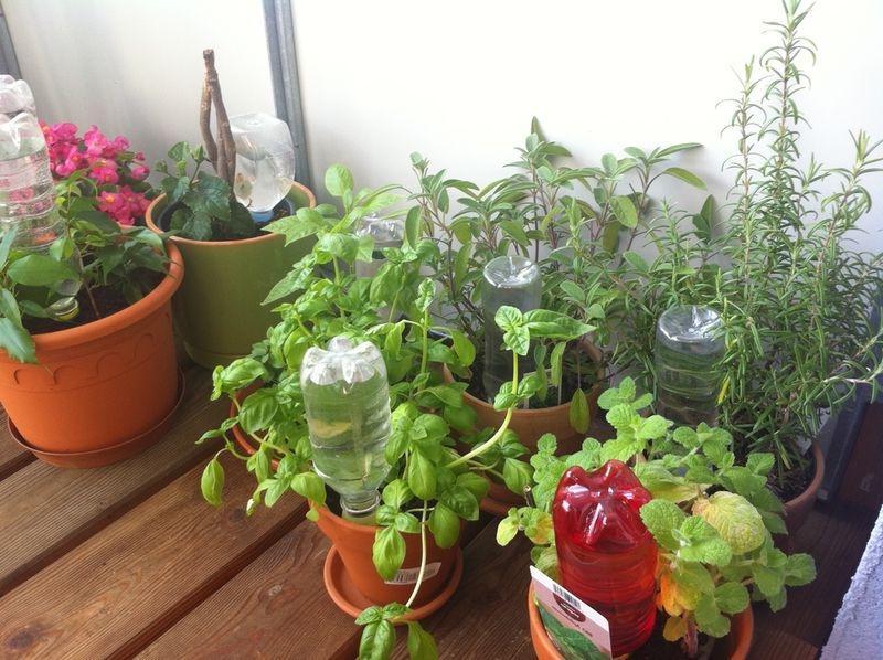 Полив комнатных растений в отсутствии хозяев 2 недели или месяц