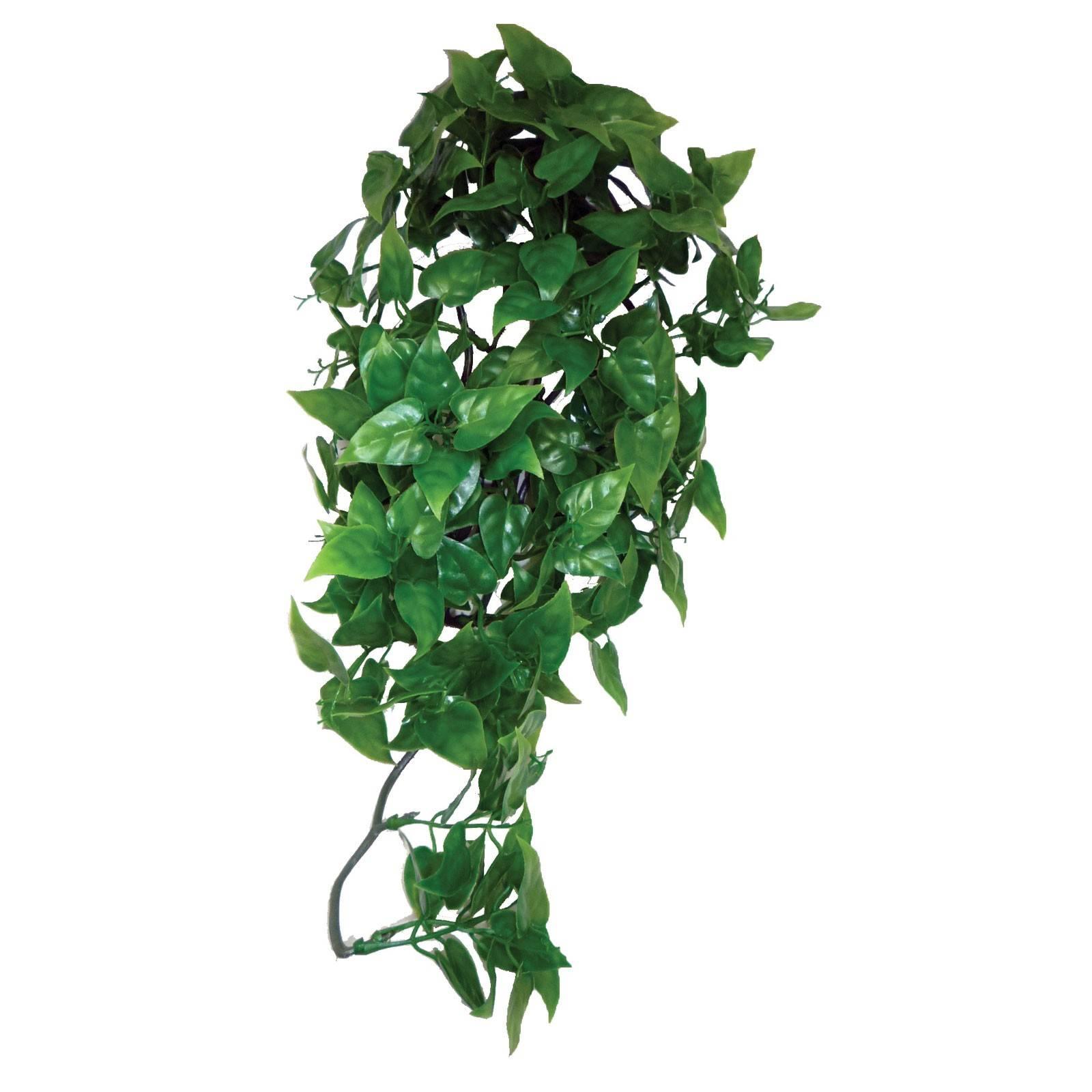 Самые популярные вьющиеся комнатные растения с фотографиями