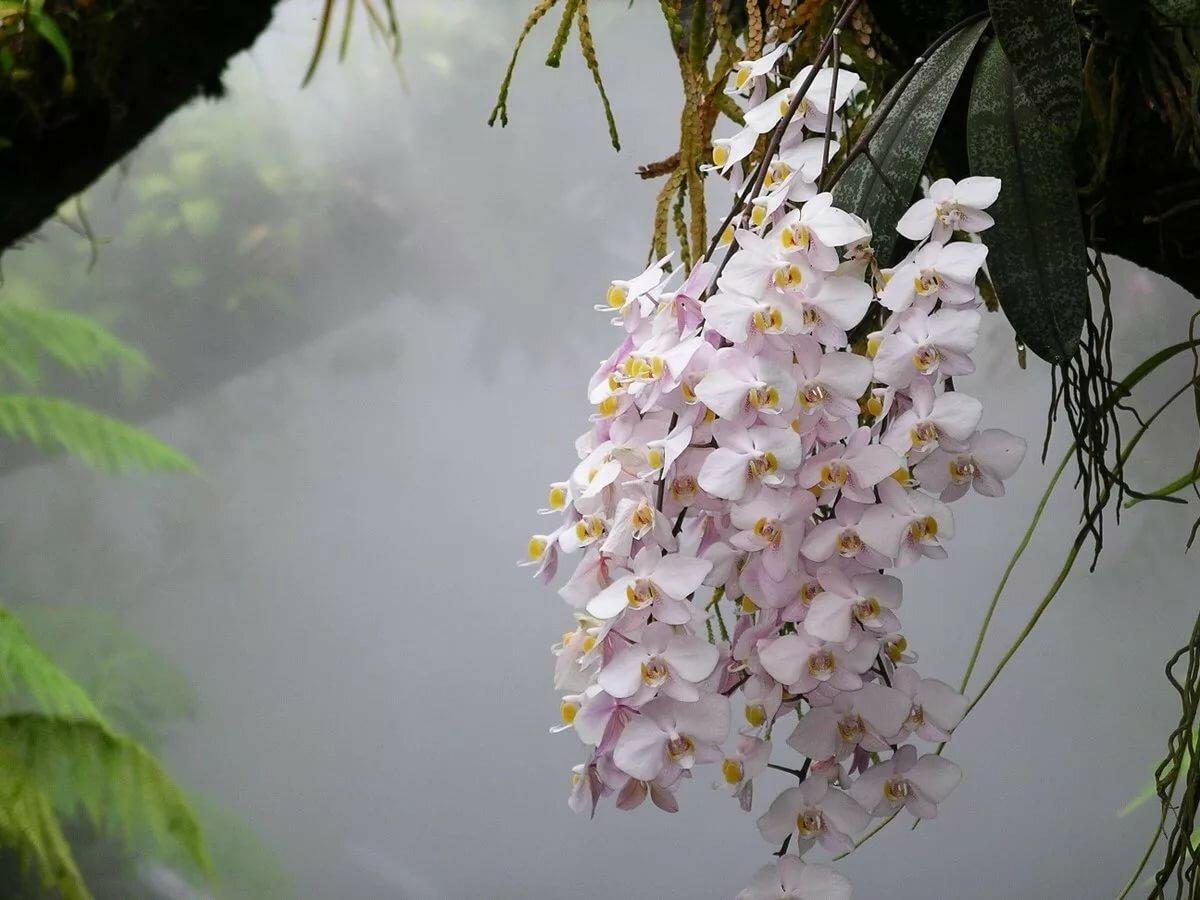 Как и где растут орхидеи в природе + фото