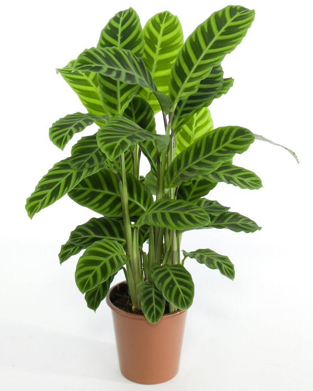Комнатные растения и уход за ними картинки