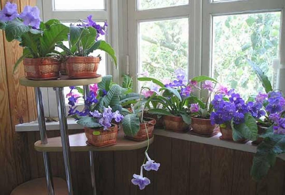 Какие цветы можно держать в спальне для здорового сна