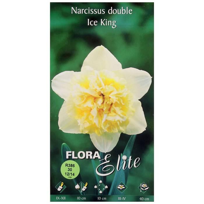 Садовая классификация нарциссов