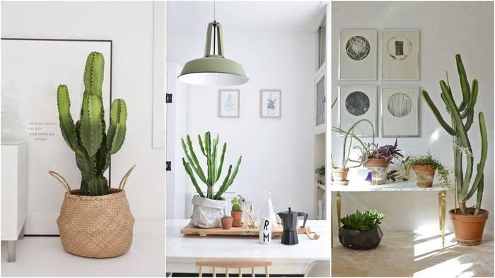 Кактус в доме - защитник от негатива: интересные приметы о колючем растении