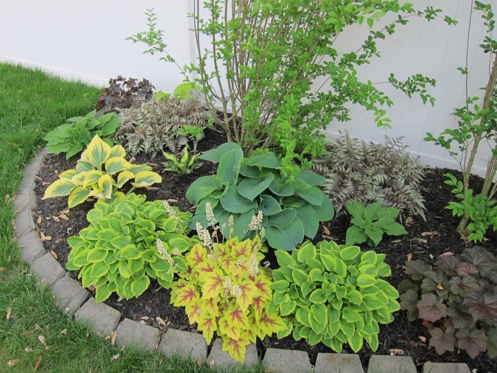 Хосты в ландшафтном дизайне участка: декорируем теневые участки сада