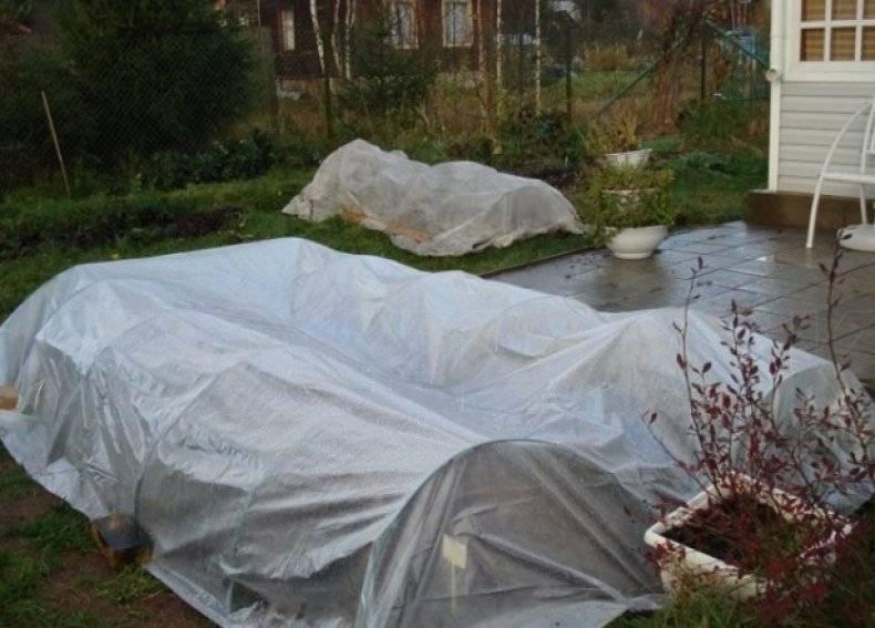 Уход за различными видами роз осенью. подготовка растений к зиме