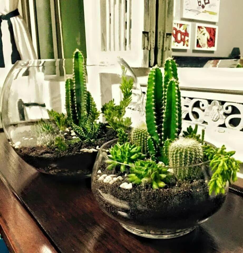 Можно ли дома держать кактусы?