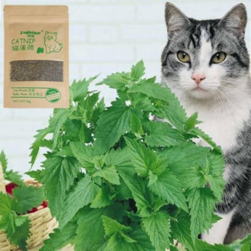 Кошачья мята—для кошек и не только