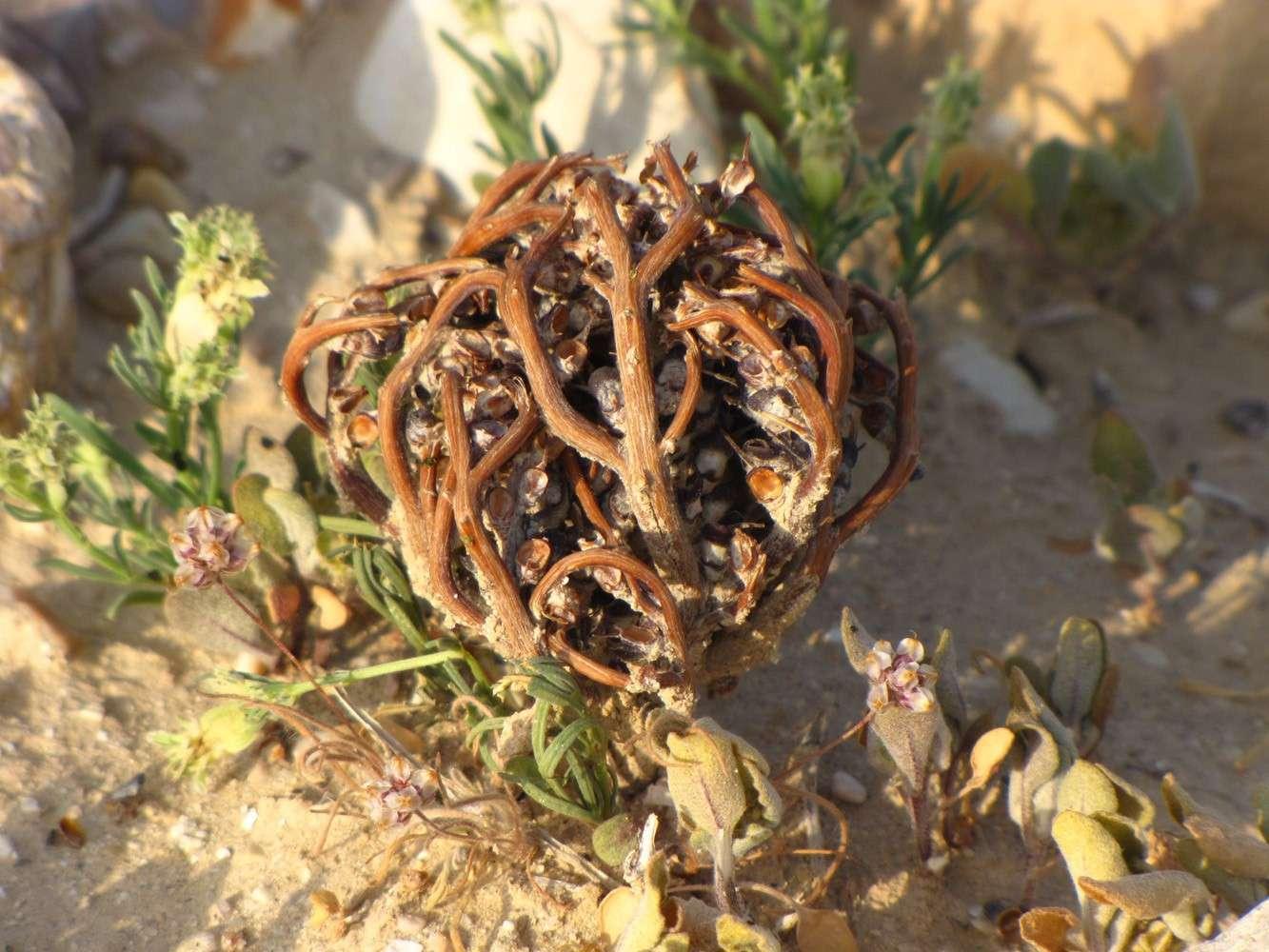 Уход за селагинеллой чешуелистной дома: почва, подкормка и другие условия
