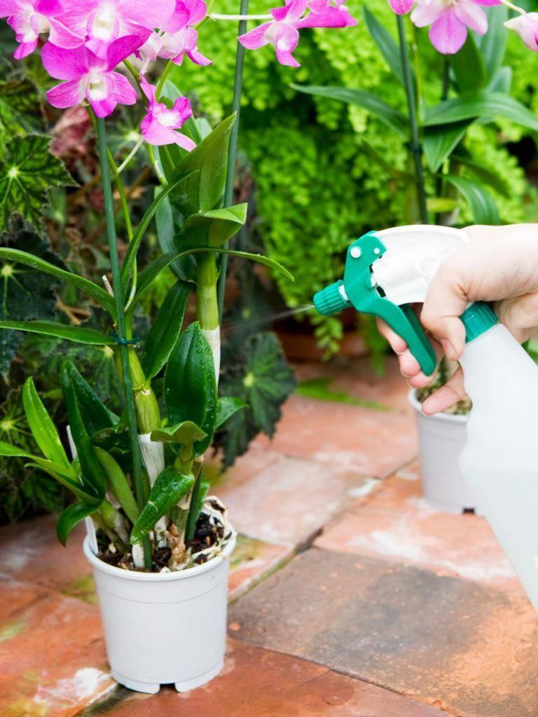 Как ухаживать за цветком орхидея (фаленопсис) в домашних условиях :: инфониак