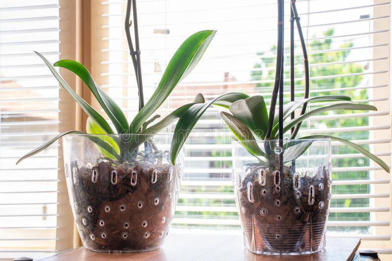 Нужен ли орхидее другой горшок? советы по выбору тары и пошаговая инструкция, как пересадить цветок