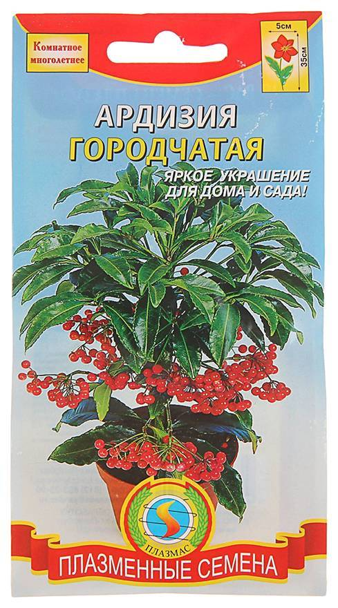 Комнатный цветок ардизия