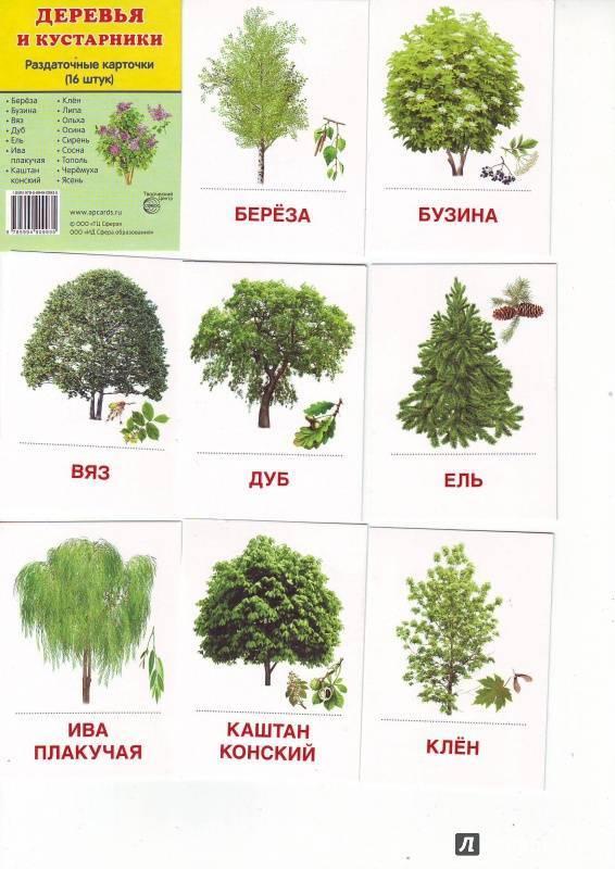 Срочное озеленение: хвойные и другие быстрорастущие деревья