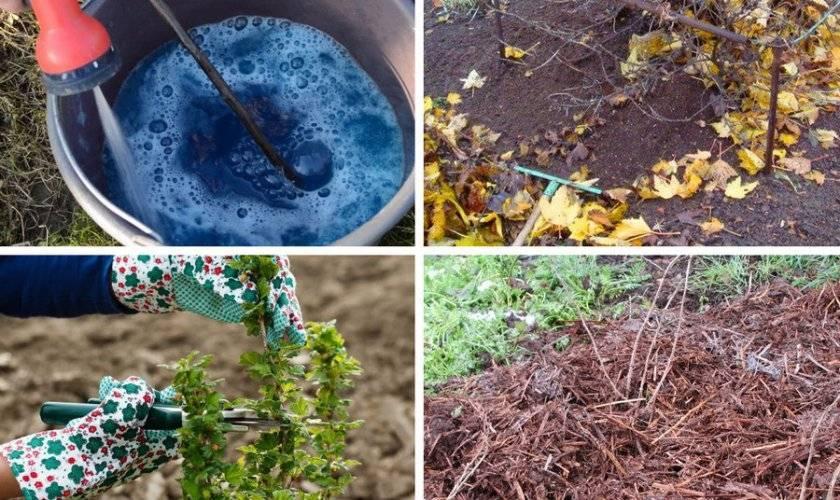 Смородина и крыжовник: когда сажать кустарники, схема посадки, правила ухода