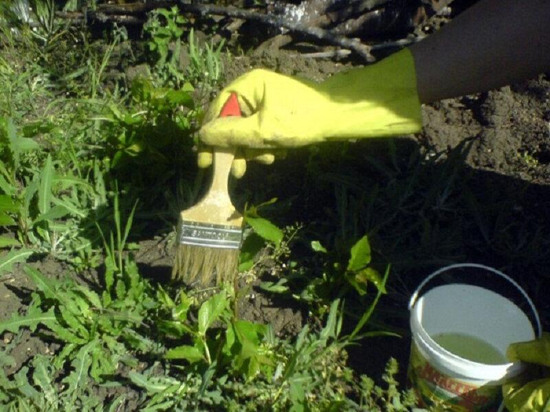 Как избавиться от хвоща полевого в огороде навсегда: советы дачникам