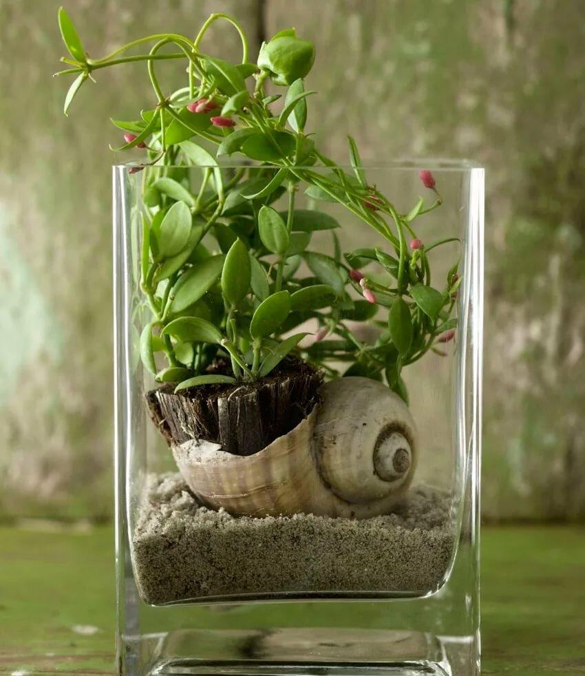 Дисхидия: фото, виды и способы ухода за растением