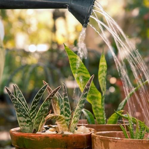 Удобрения для комнатных растений: разновидности и правила подкормки