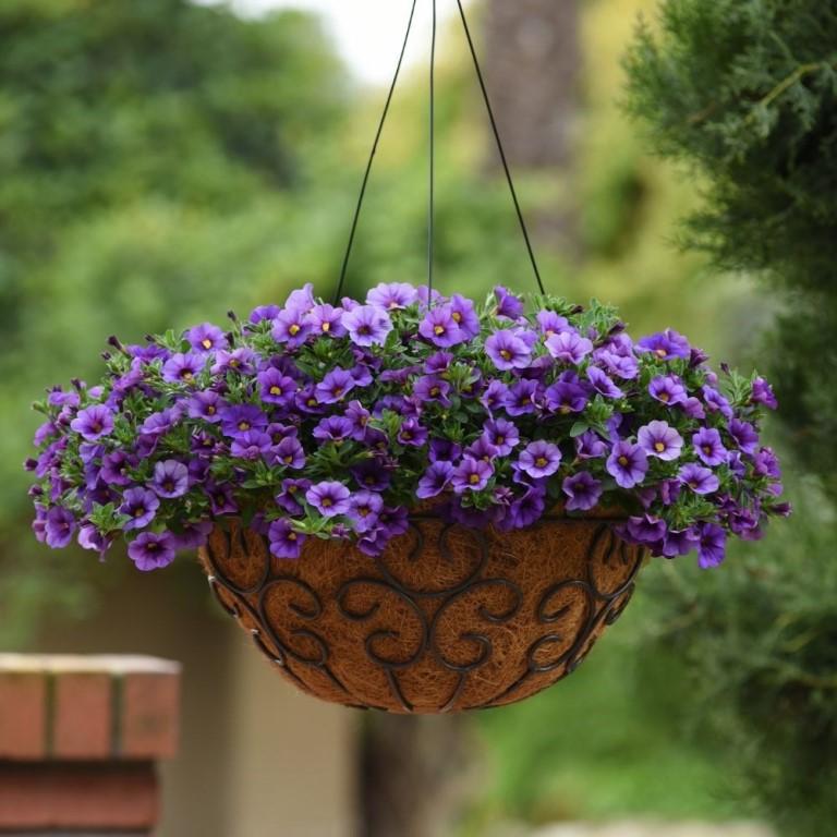 Какие сорта петунии можно выращивать в кашпо? выбор емкости, посадка и уход