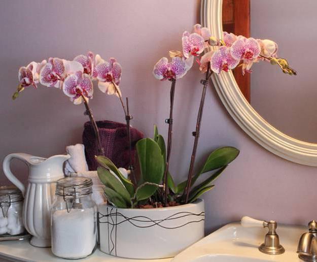 Вредны ли орхидеи, свойства, влияние на человека