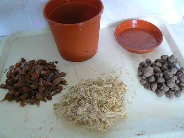 Цитокининовая паста для орхидей: инструкция по использованию