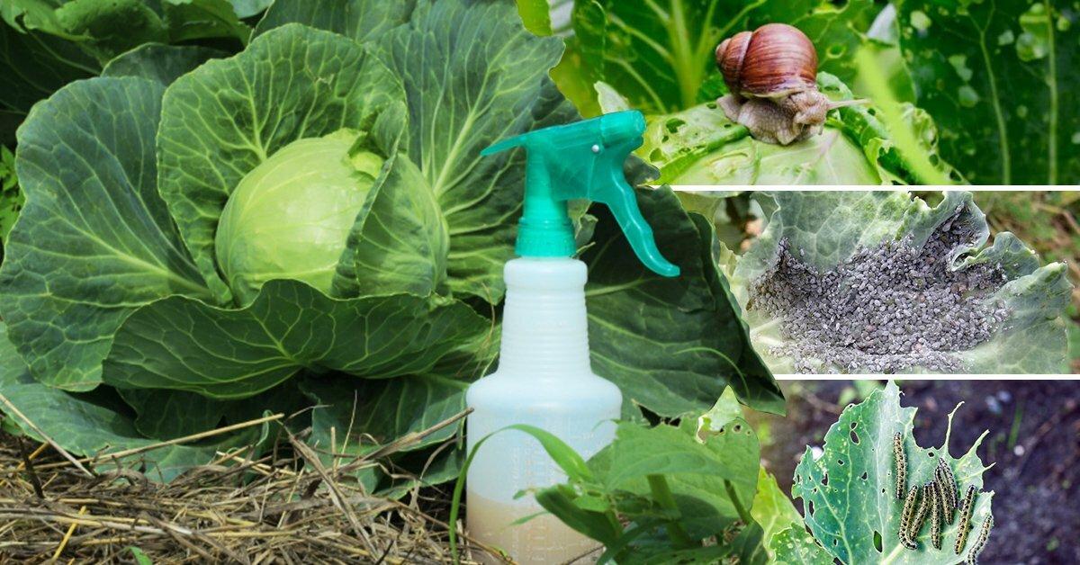 Чем обработать розы от болезней и вредителей