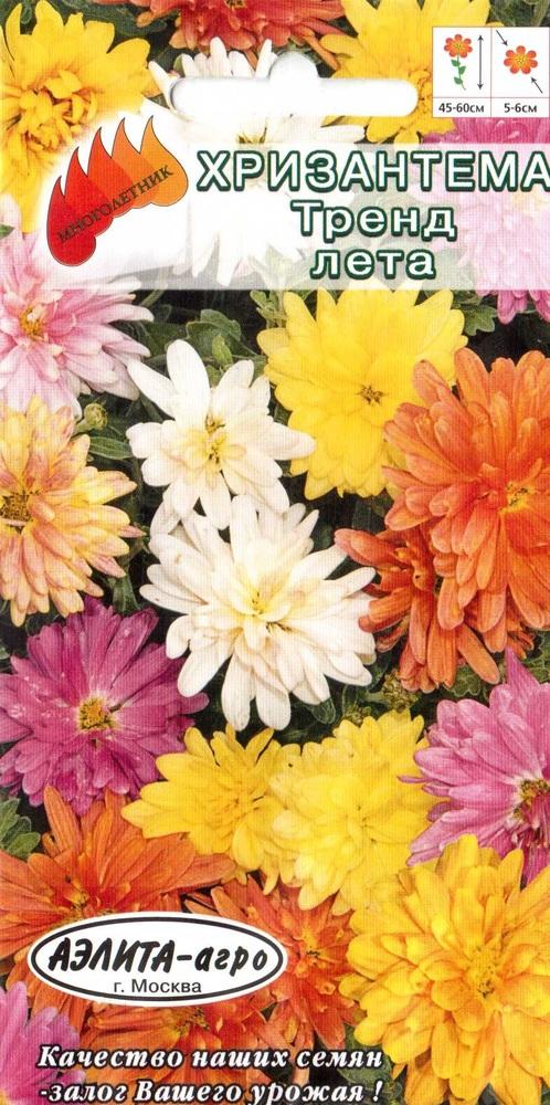 Выращивание индийской хризантемы