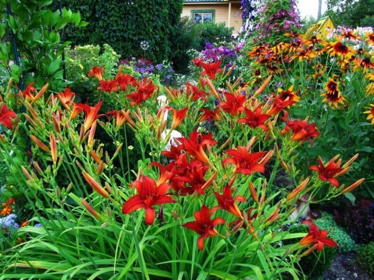 15 многолетников, которые цветут все лето