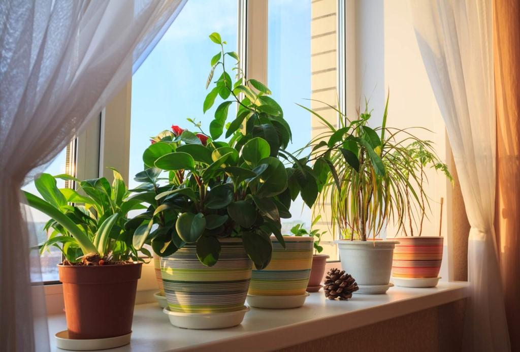 Неприхотливые комнатные растения, или озеленение дома для ленивых