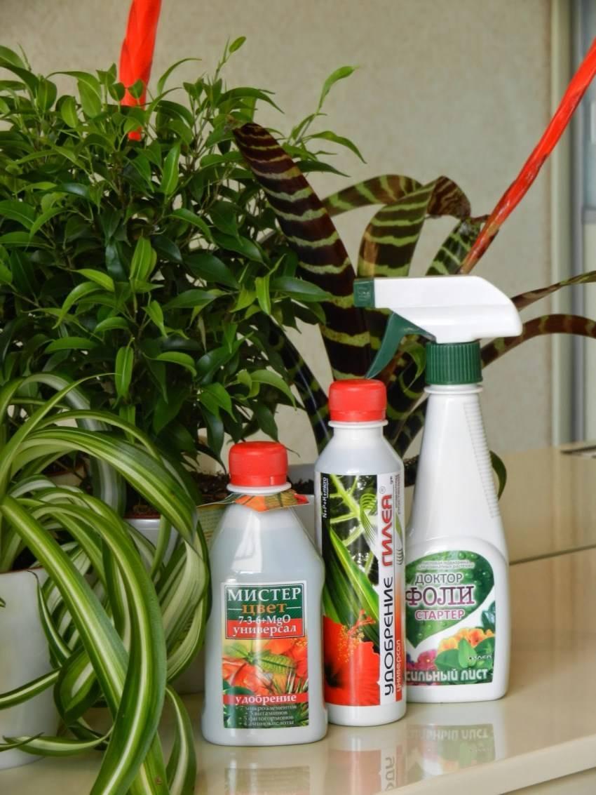 Удобрение для комнатных растений в домашних условиях - узнайте более 10 рецептов