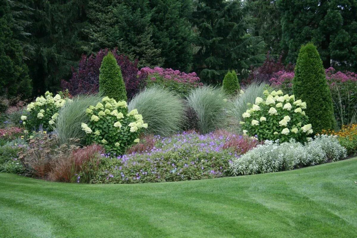 Гортензии в ландшафтном дизайне — с какими растениями сочетаются на клумбе