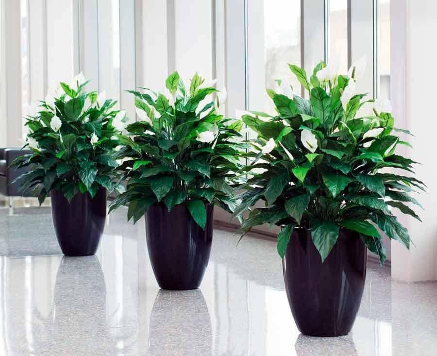 Солнцелюбивые, светолюбивые, теневыносливые и тенелюбивые комнатные растения