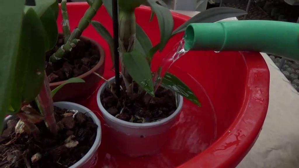 Орхидея — уход в домашних условиях после цветения