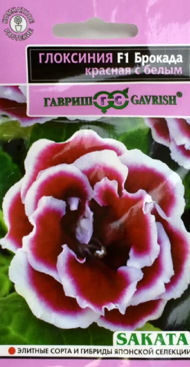 Выращивание и уход за глоксинией в домашних условиях, в том числе зимой в период покоя, посадка, фото