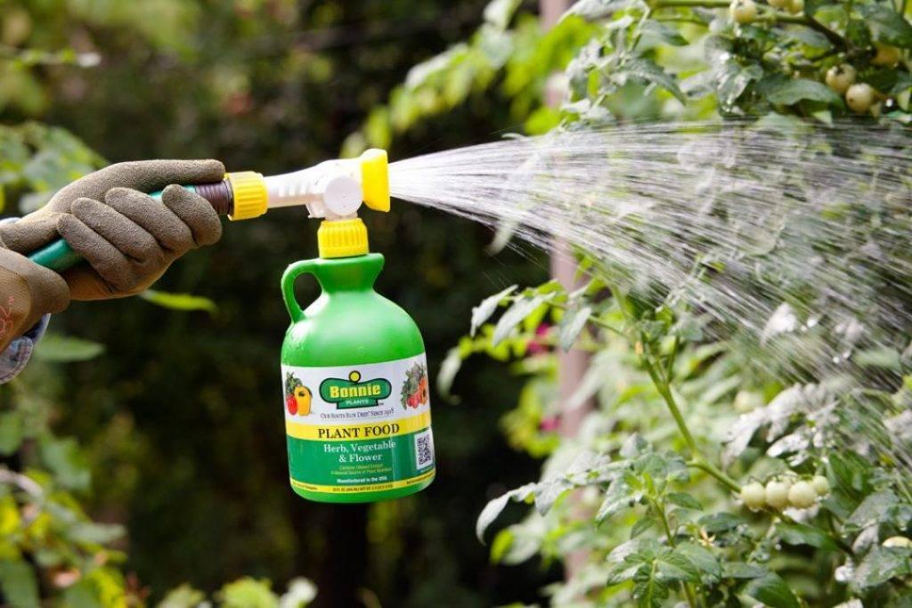 Онцидиум: хотите цветения - поливайте правильно