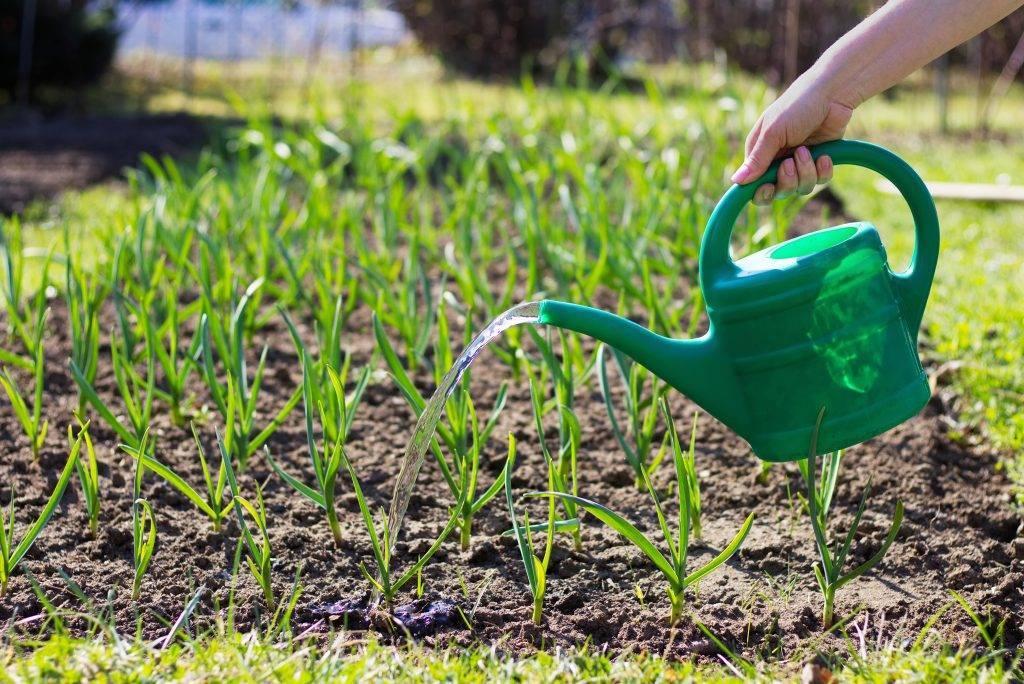 Удобрение для крыжовника весной