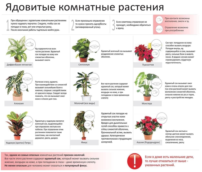 10 цветов которые могут вас убить. ядовитые комнатные растения