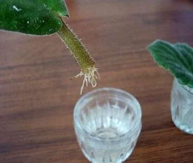 Способы размножения кактусов в домашних условиях
