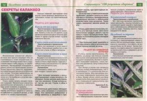 Каланхоэ лечебный: как выглядит, фото, полезные свойства